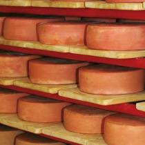Käse bei der Reifung